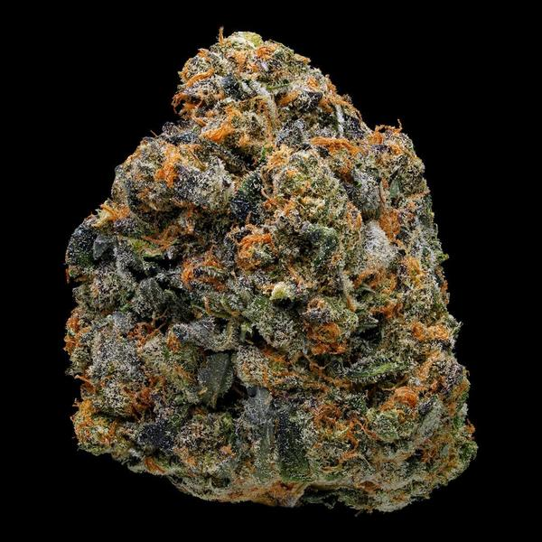 elev8 seeds thin mint girl scout cookies primo seeds