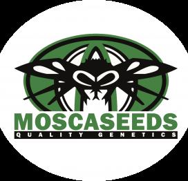 Mosca Seeds